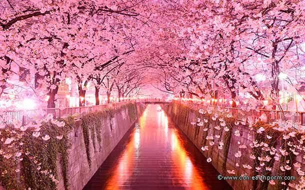 Sakura Tunnel, Japan-01